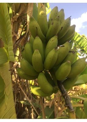 Banane Figue Sucrée